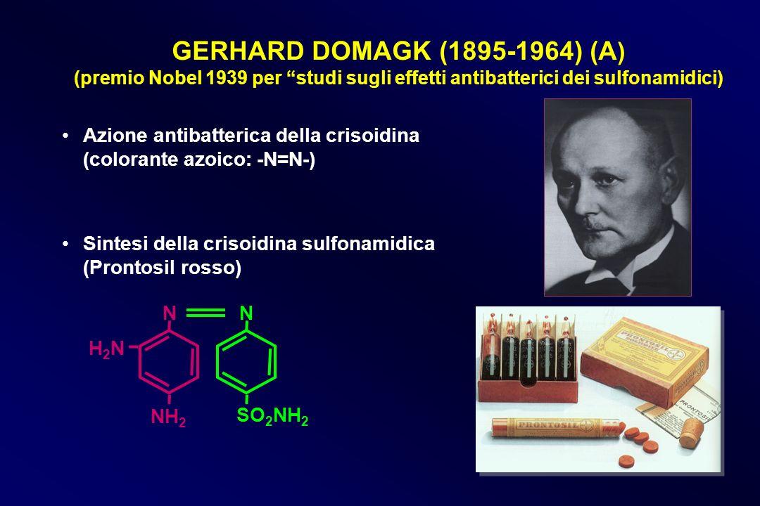 GERHARD DOMAGK (1895-1964) (A ) (premio Nobel 1939 per studi sugli effetti antibatterici dei sulfonamidici) Azione antibatterica della crisoidina (col