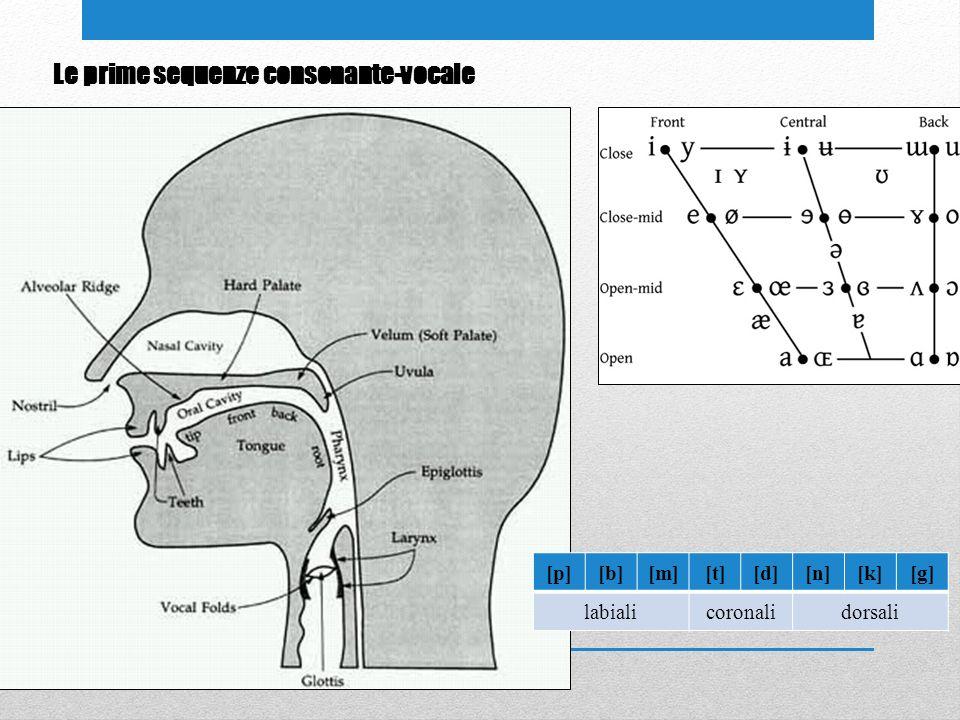 [p][b][m][t][d][n][k][g] labialicoronalidorsali Le prime sequenze consonante-vocale