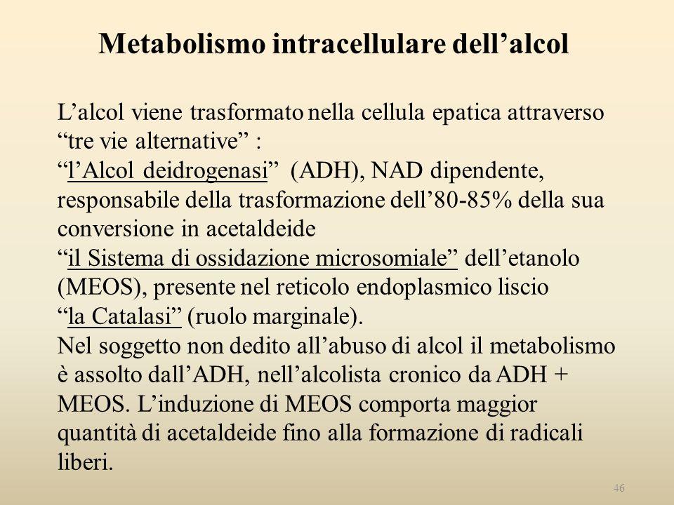 Metabolismo intracellulare dellalcol Lalcol viene trasformato nella cellula epatica attraverso tre vie alternative :lAlcol deidrogenasi (ADH), NAD dip