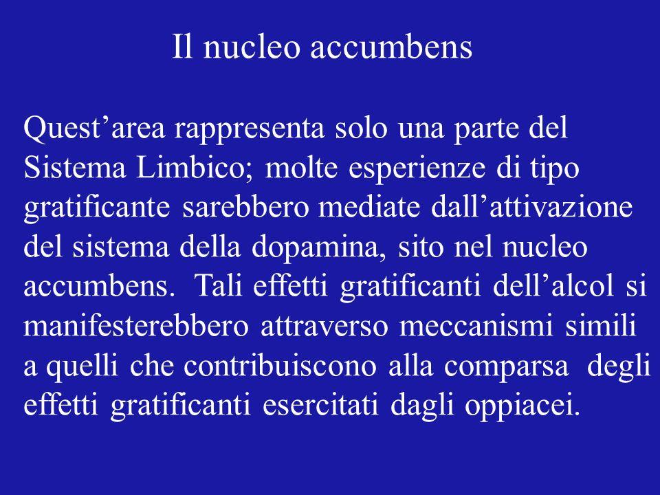 Il nucleo accumbens Questarea rappresenta solo una parte del Sistema Limbico; molte esperienze di tipo gratificante sarebbero mediate dallattivazione