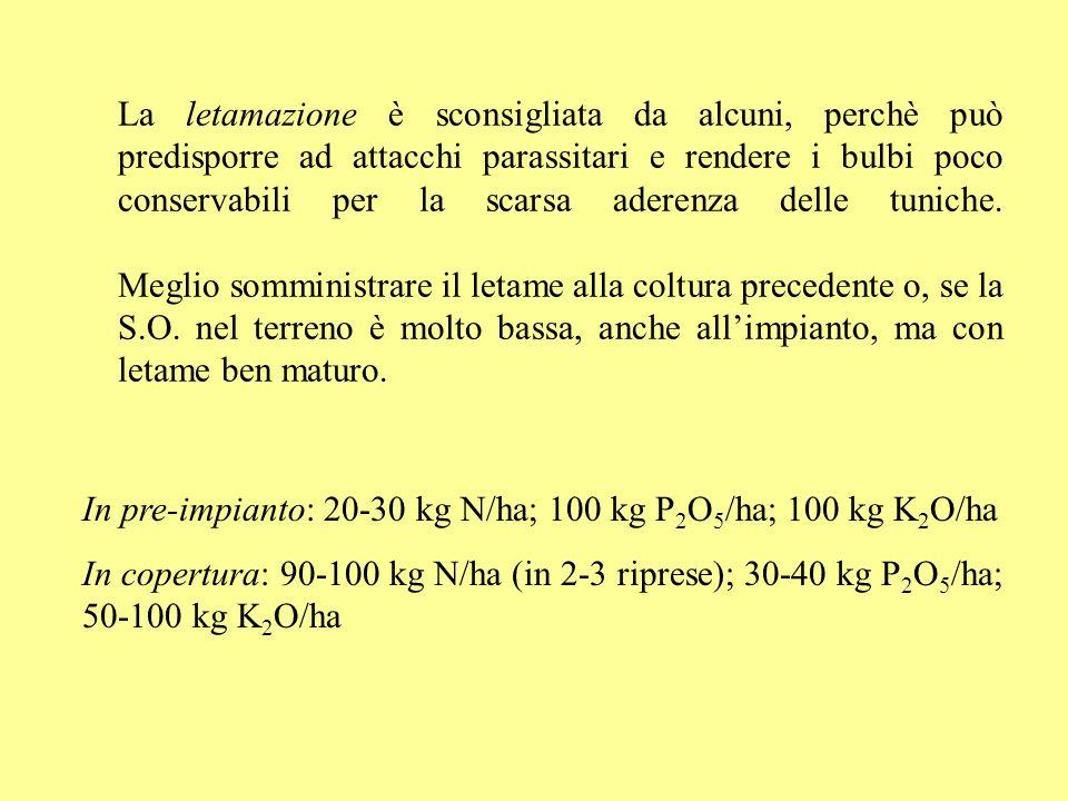 La letamazione è sconsigliata da alcuni, perchè può predisporre ad attacchi parassitari e rendere i bulbi poco conservabili per la scarsa aderenza del
