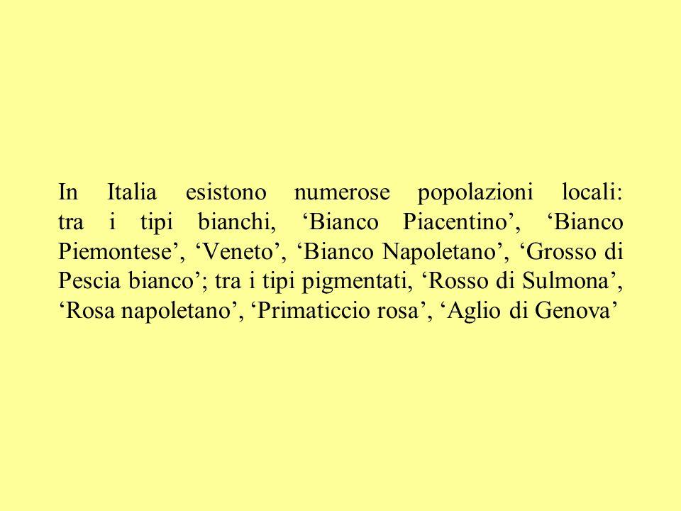 In Italia esistono numerose popolazioni locali: tra i tipi bianchi, Bianco Piacentino, Bianco Piemontese, Veneto, Bianco Napoletano, Grosso di Pescia