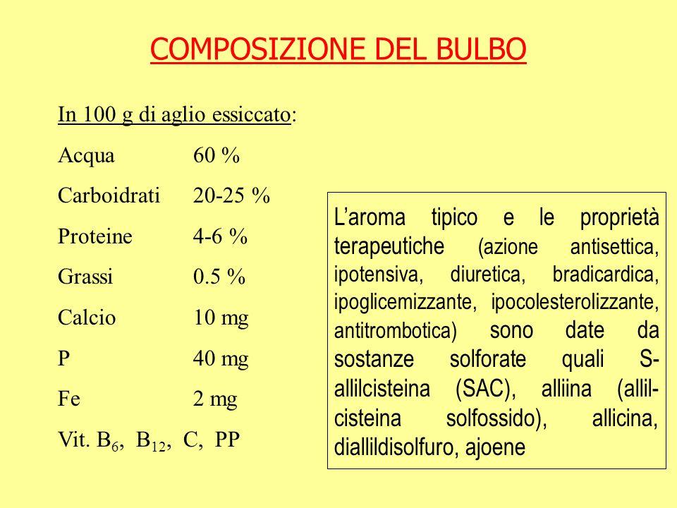 COMPOSIZIONE DEL BULBO In 100 g di aglio essiccato: Acqua60 % Carboidrati20-25 % Proteine4-6 % Grassi0.5 % Calcio10 mg P40 mg Fe2 mg Vit. B 6, B 12, C