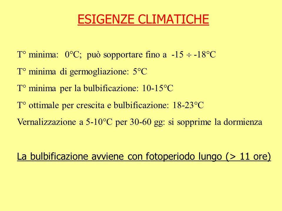 ESIGENZE CLIMATICHE T° minima: 0°C; può sopportare fino a -15 -18°C T° minima di germogliazione: 5°C T° minima per la bulbificazione: 10-15°C T° ottim
