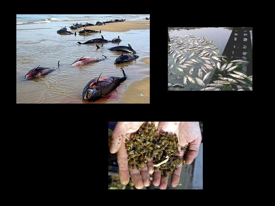 30. Accetto la distruzione dei boschi, la quasi scomparsa dei pesci nei fiumi e della vita nei nostri oceani. Accetto l'estinzione delle specie animal