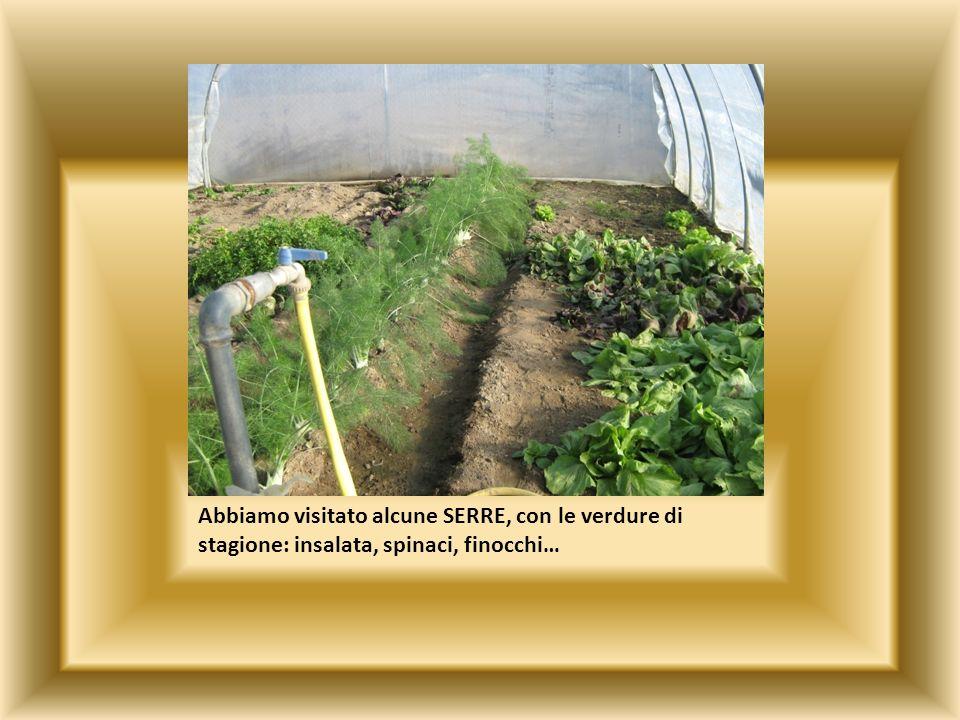 Abbiamo visitato alcune SERRE, con le verdure di stagione: insalata, spinaci, finocchi…