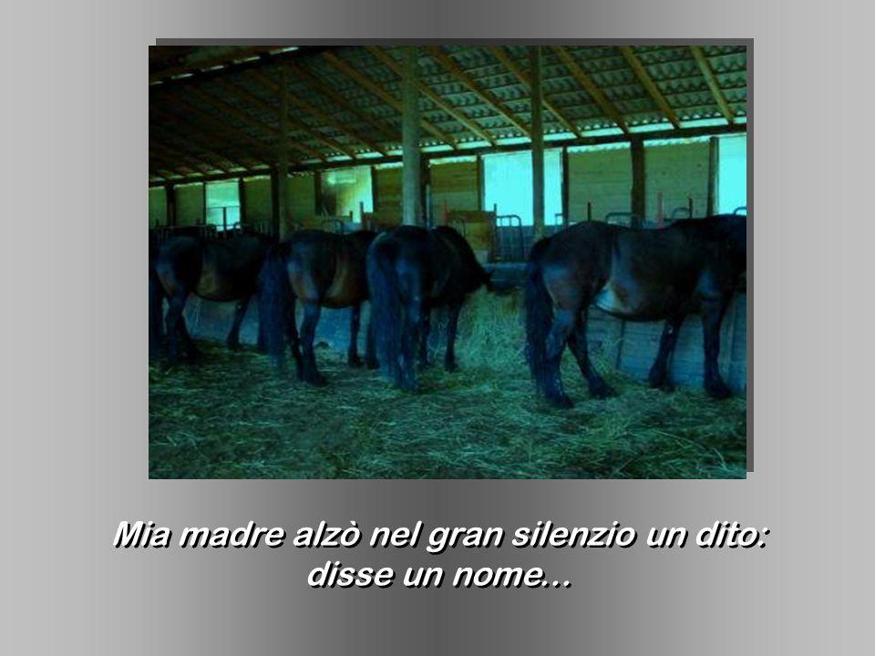 Mia madre alzò nel gran silenzio un dito: disse un nome... Mia madre alzò nel gran silenzio un dito: disse un nome...