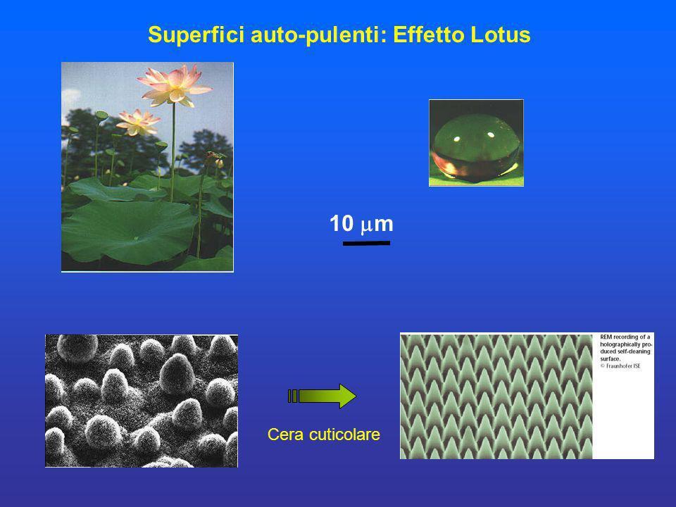 10 m Cera cuticolare Superfici auto-pulenti: Effetto Lotus