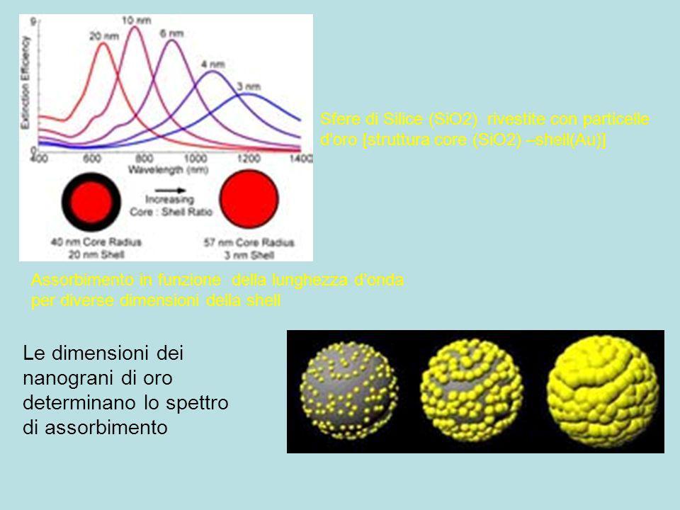 Le dimensioni dei nanograni di oro determinano lo spettro di assorbimento Sfere di Silice (SiO2) rivestite con particelle doro [struttura core (SiO2)