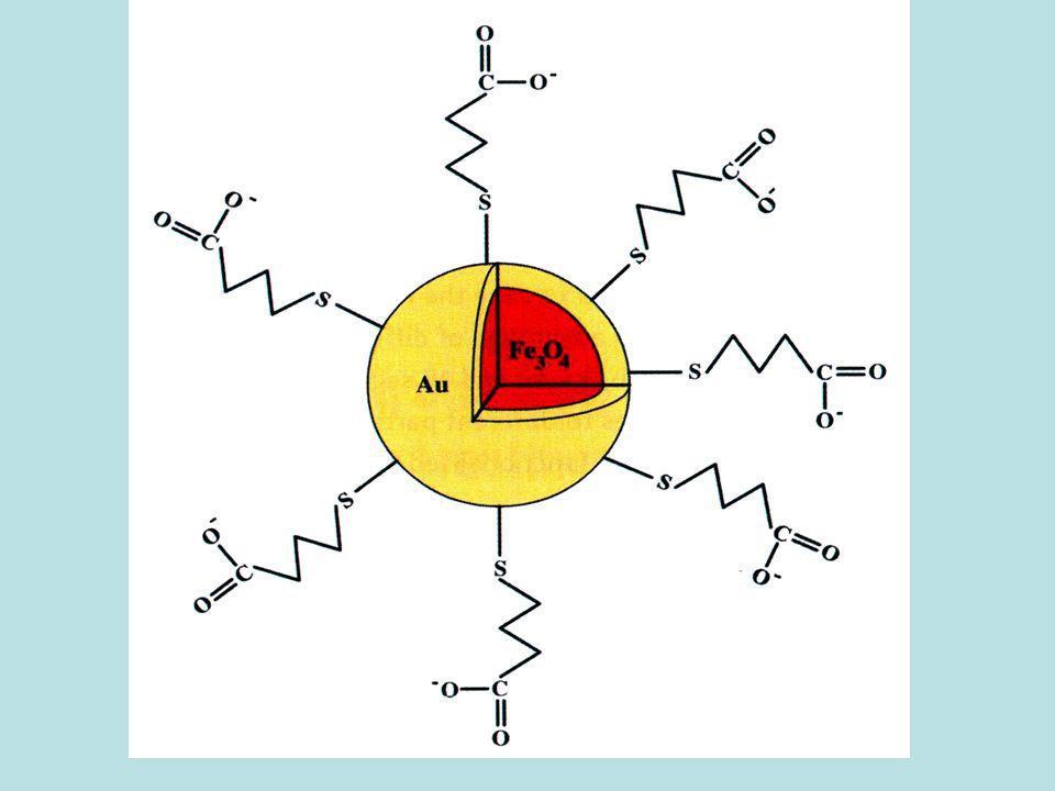 Test in vivo di luminescenza ed assorbimento da nanoparticelle