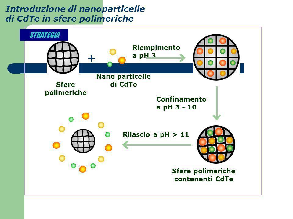 Introduzione di nanoparticelle di CdTe in sfere polimeriche Riempimento a pH 3 + Sfere polimeriche Nano particelle di CdTe Sfere polimeriche contenent