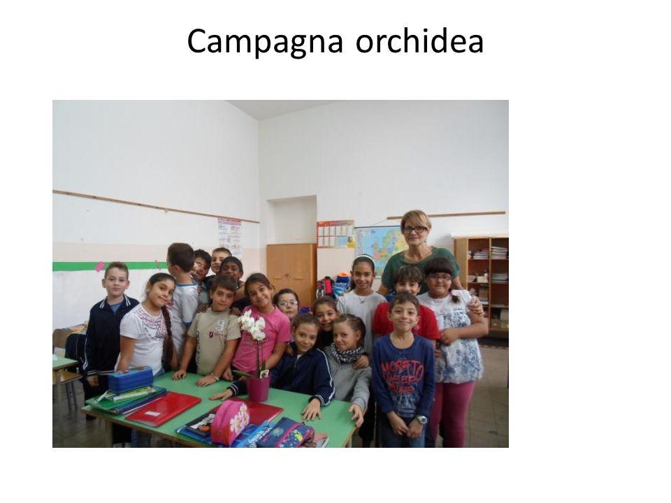 Campagna orchidea