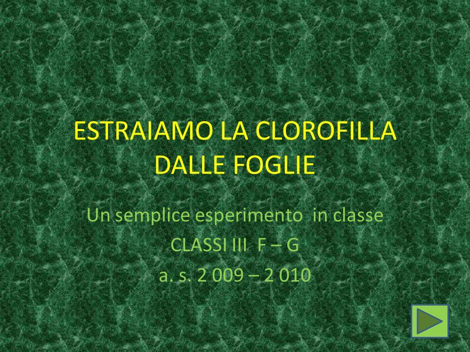 ESTRAIAMO LA CLOROFILLA DALLE FOGLIE Un semplice esperimento in classe CLASSI III F – G a. s. 2 009 – 2 010