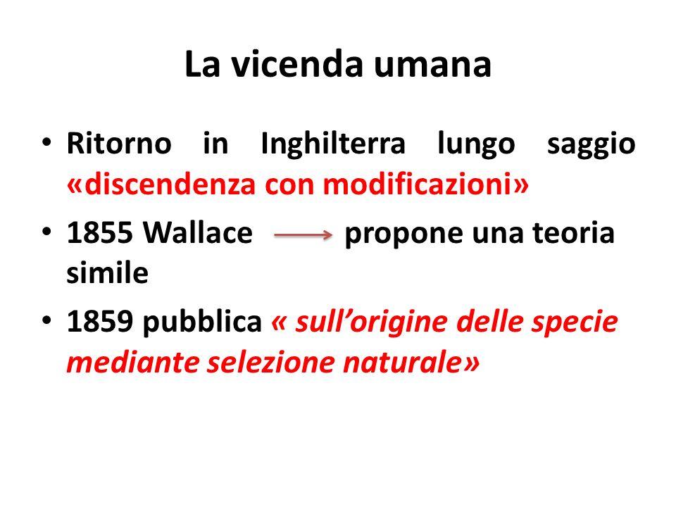 La vicenda umana Ritorno in Inghilterra lungo saggio «discendenza con modificazioni» 1855 Wallace propone una teoria simile 1859 pubblica « sullorigin