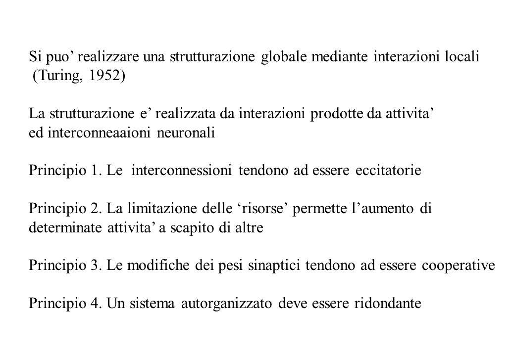 Si puo realizzare una strutturazione globale mediante interazioni locali (Turing, 1952) La strutturazione e realizzata da interazioni prodotte da attivita ed interconneaaioni neuronali Principio 1.