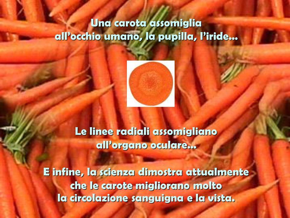 Larancia, il pompelmo e gli altri frutti citrici assomigliano alle ghiandole dei seni delle donne… Stimolano la salute dei seni e il movimento interno ed esterno delle linfe, nei seni.