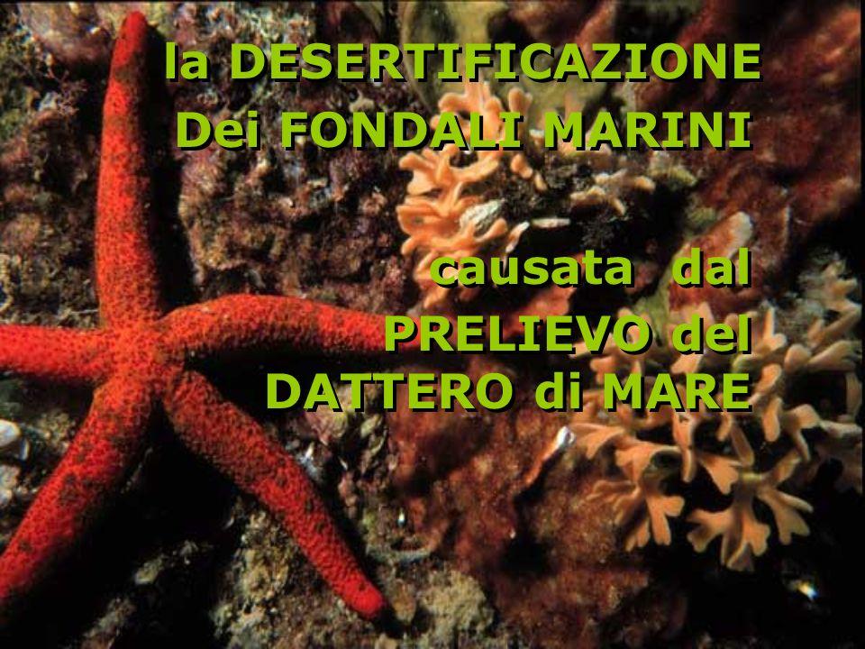la DESERTIFICAZIONE Dei FONDALI MARINI la DESERTIFICAZIONE Dei FONDALI MARINI causata dal PRELIEVO del DATTERO di MARE causata dal PRELIEVO del DATTERO di MARE