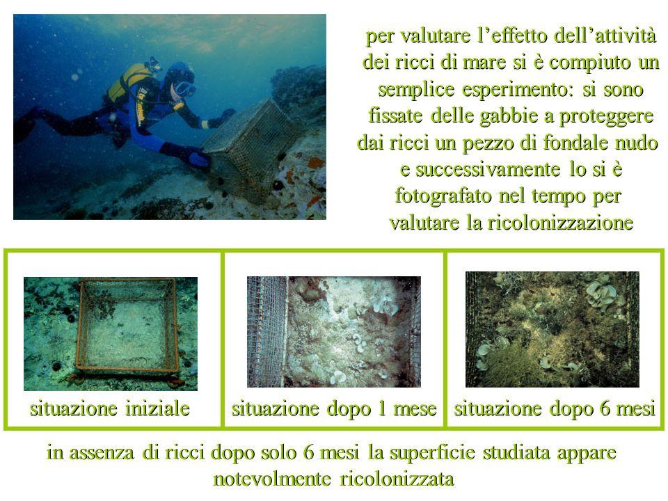 I biologi hanno mappato il danno causato dalla pesca del dattero di mare sui fondali salentini