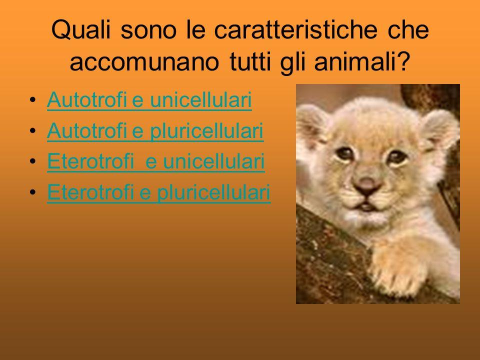 Quali sono le caratteristiche che accomunano tutti gli animali.