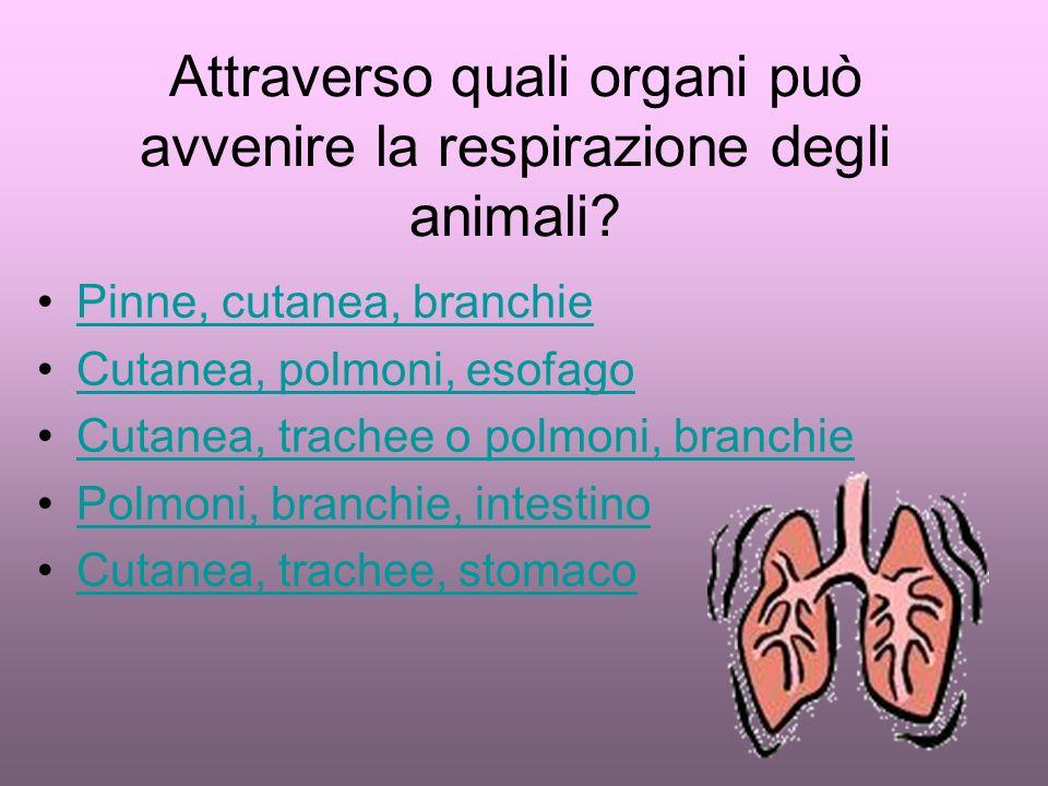 Attraverso quali organi può avvenire la respirazione degli animali.