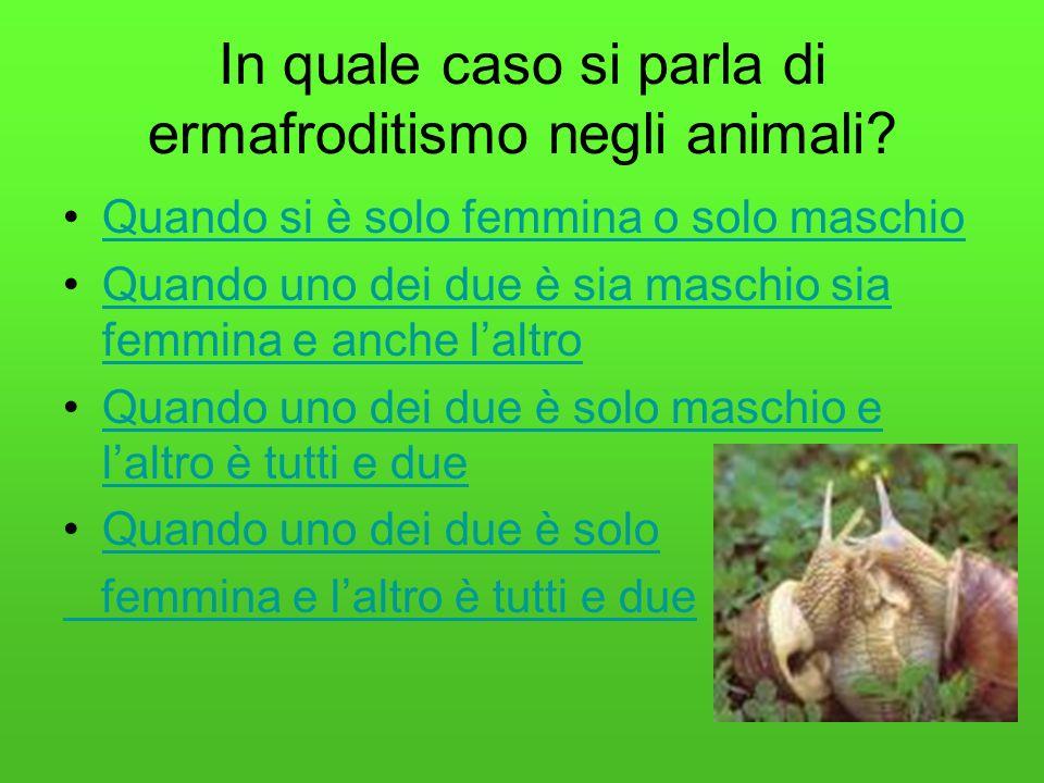 In quale caso si parla di ermafroditismo negli animali.