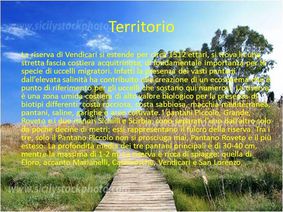 Territorio La riserva di Vendicari si estende per circa 1512 ettari, si trova in una stretta fascia costiera acquitrinosa, di fondamentale importanza per le specie di uccelli migratori.