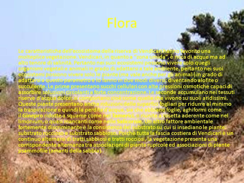 Flora Le caratteristiche dellecosistema della riserva di Vendicari hanno favorito una molteplice vegetazione. Vendicari, in quanto a zona umida, è ric