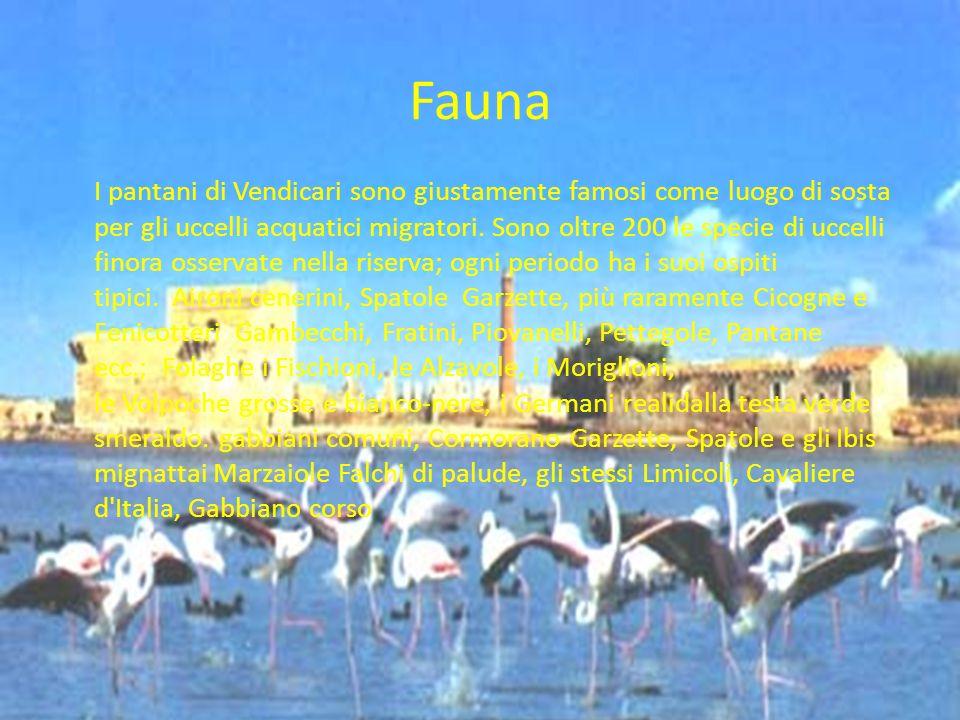 Fauna I pantani di Vendicari sono giustamente famosi come luogo di sosta per gli uccelli acquatici migratori. Sono oltre 200 le specie di uccelli fino