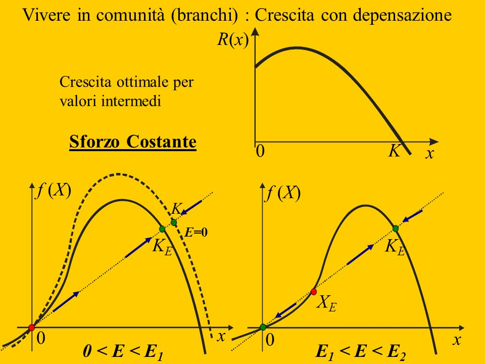R(x)R(x) K 0 x Vivere in comunità (branchi) : Crescita con depensazione Crescita ottimale per valori intermedi x f (X) E=0 K Sforzo Costante KEKE 0 0