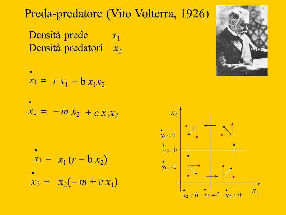 Preda-predatore (Vito Volterra, 1926) Densità prede x 1 Densità predatori x 2 r x 1 m x 2 + c x 1 x 2 b x 1 x 2 x1x1 x2x2 x 1 (r b x 2 ) x 2 ( m + c x