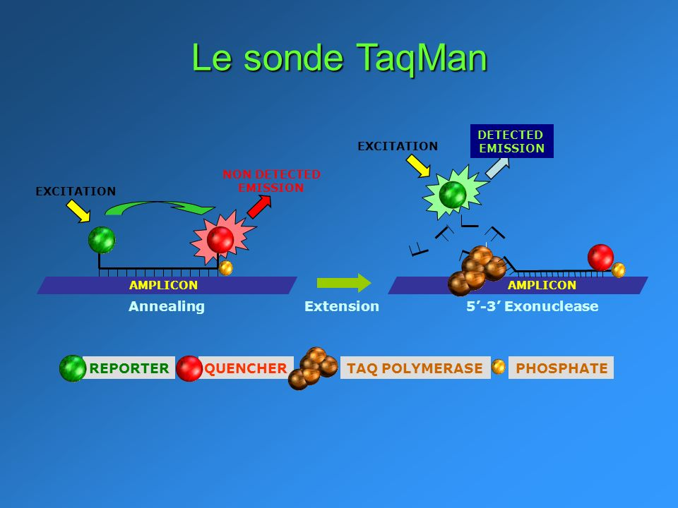 NON DETECTED EMISSION Extension5-3 Exonuclease AMPLICON Annealing AMPLICON EXCITATION DETECTED EMISSION REPORTERQUENCHERTAQ POLYMERASEPHOSPHATE Le sonde TaqMan
