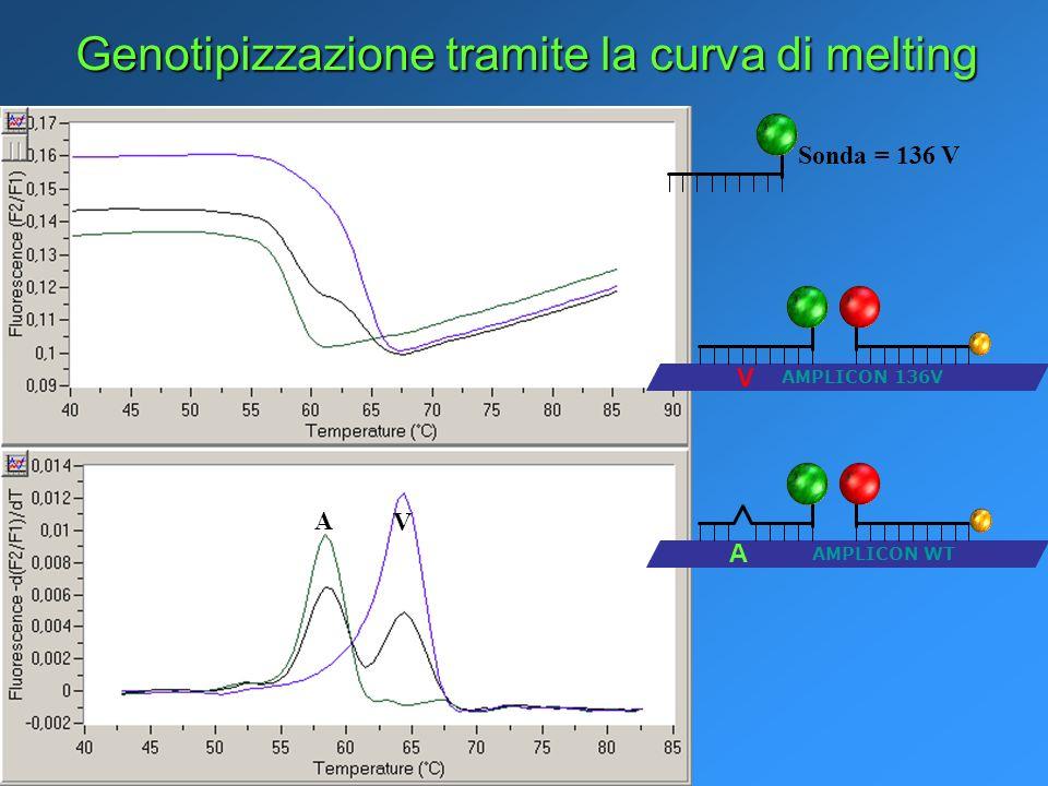 Genotipizzazione tramite la curva di melting AMPLICON 136V V AMPLICON WT A Sonda = 136 V V A