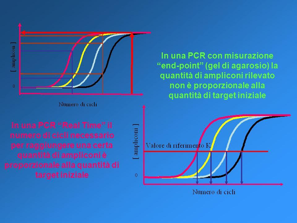 In una PCR con misurazione end-point (gel di agarosio) la quantità di ampliconi rilevato non è proporzionale alla quantità di target iniziale In una P