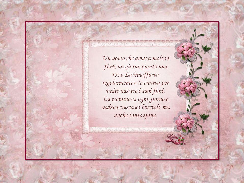 Un uomo che amava molto i fiori, un giorno piantò una rosa.