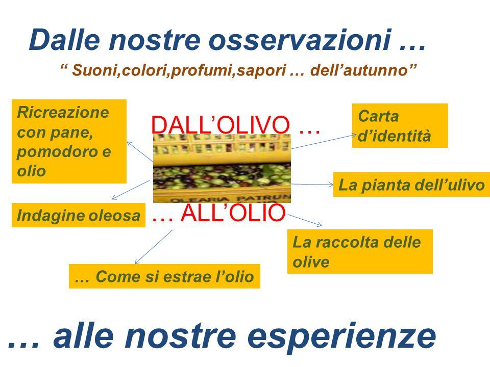 Lolivicoltura in Puglia La terra di PUGLIA possiede un clima dolce e particolarmente favorevole alla coltivazione dellolivo.
