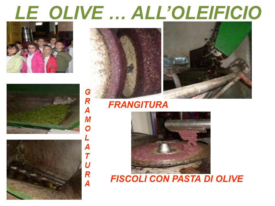 LE OLIVE … ALLOLEIFICIO GRAMOLATURAGRAMOLATURA FRANGITURA FISCOLI CON PASTA DI OLIVE