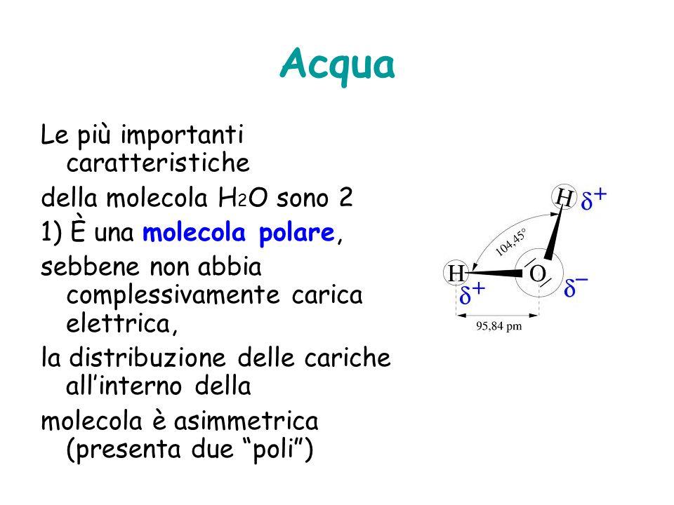 2) Lacqua è altamente coesiva le molecole di acqua sono molto affini tra loro e si orientano in modo da formare più legami H possibili