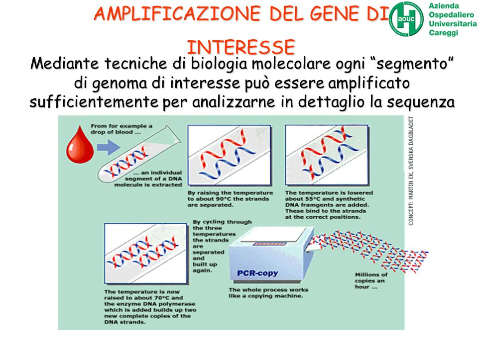 Mediante tecniche di biologia molecolare ogni segmento di genoma di interesse può essere amplificato sufficientemente per analizzarne in dettaglio la