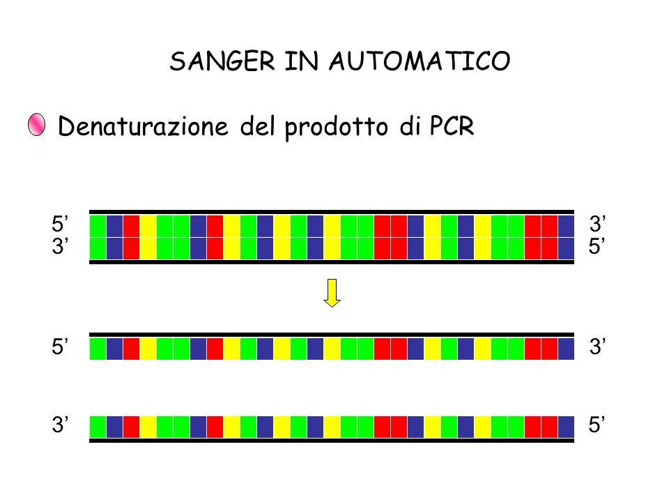 SANGER IN AUTOMATICO Denaturazione del prodotto di PCR 5 5 3 3 5 5 3 3