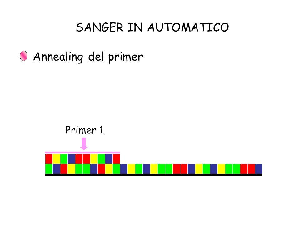 Primer 1 SANGER IN AUTOMATICO Annealing del primer