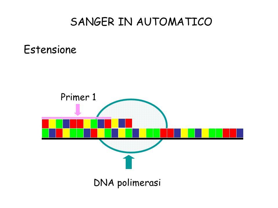 Estensione Primer 1 DNA polimerasi SANGER IN AUTOMATICO