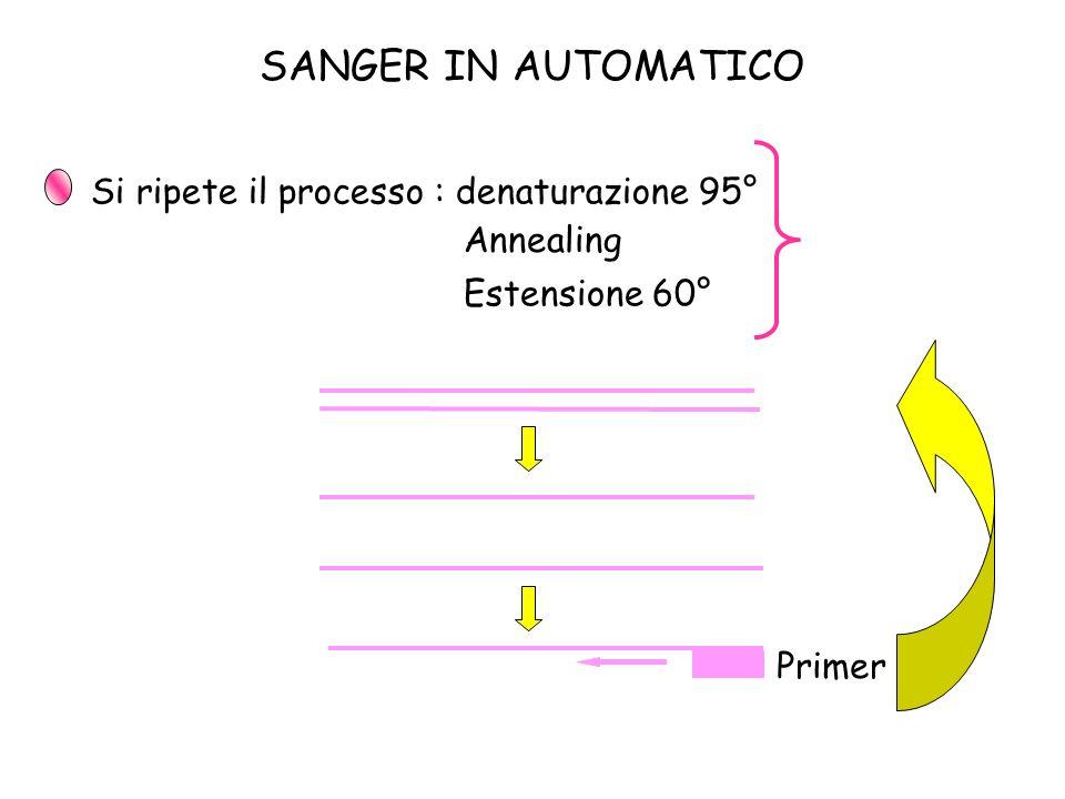 Si ripete il processo : denaturazione 95° Primer 1 Annealing Estensione 60° 25 CICLI SANGER IN AUTOMATICO