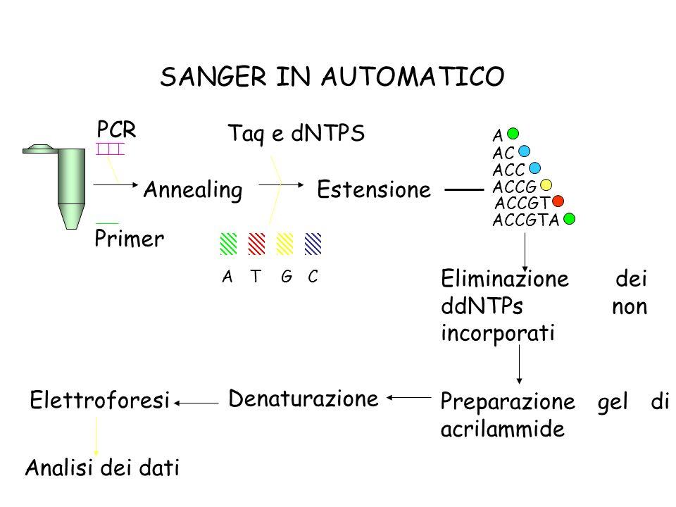 PCR Primer AnnealingEstensione ACTG Taq e dNTPS A AC ACC ACCG ACCGT ACCGTA Eliminazione dei ddNTPs non incorporati Preparazione gel di acrilammide Ele