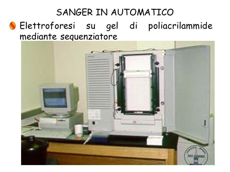 SANGER IN AUTOMATICO Elettroforesi su gel di poliacrilammide mediante sequenziatore