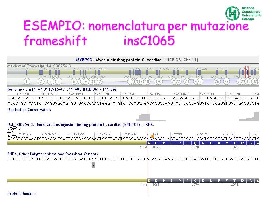 ESEMPIO: nomenclatura per mutazione frameshift insC1065