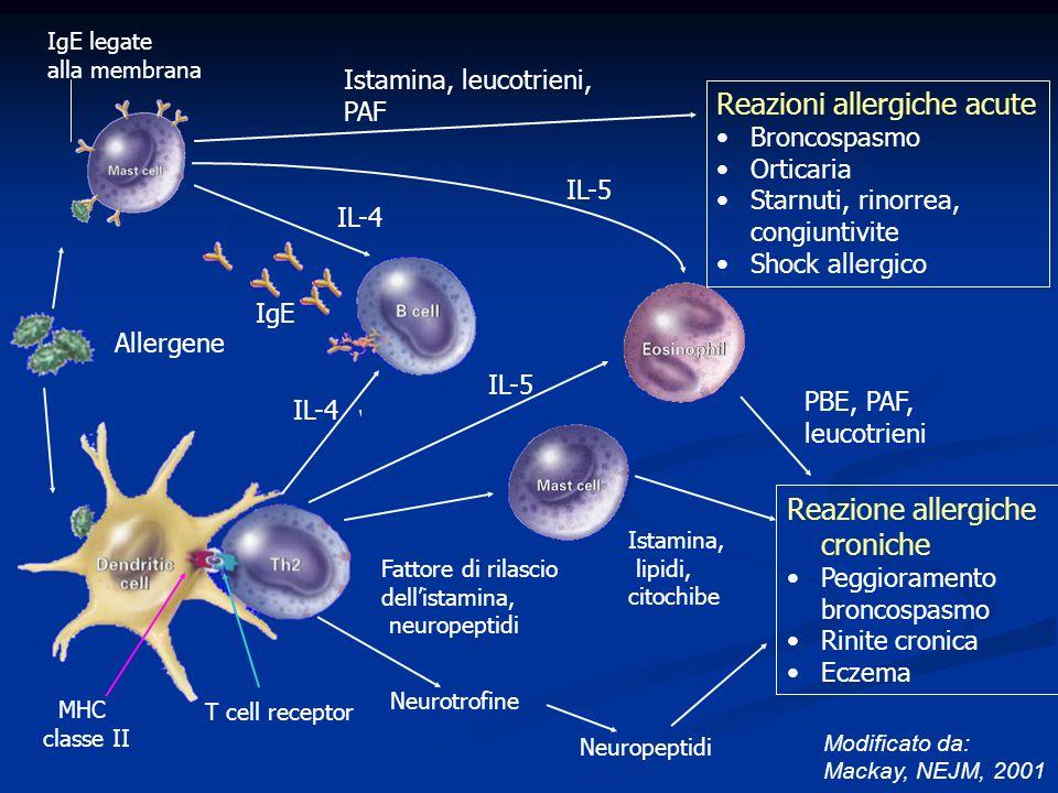 IgE legate alla membrana Reazioni allergiche acute Broncospasmo Orticaria Starnuti, rinorrea, congiuntivite Shock allergico Istamina, leucotrieni, PAF