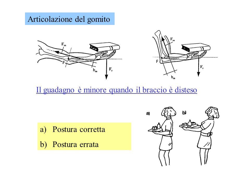 Il guadagno è minore quando il braccio è disteso a)Postura corretta b)Postura errata Articolazione del gomito