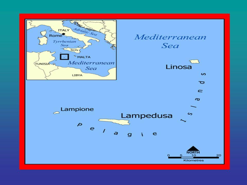 Discorso a parte va fatto per lIsola dei Porri che si trova di fronte a Santa Maria del Focallo in territorio ispicese in provincia di Ragusa lunga 15