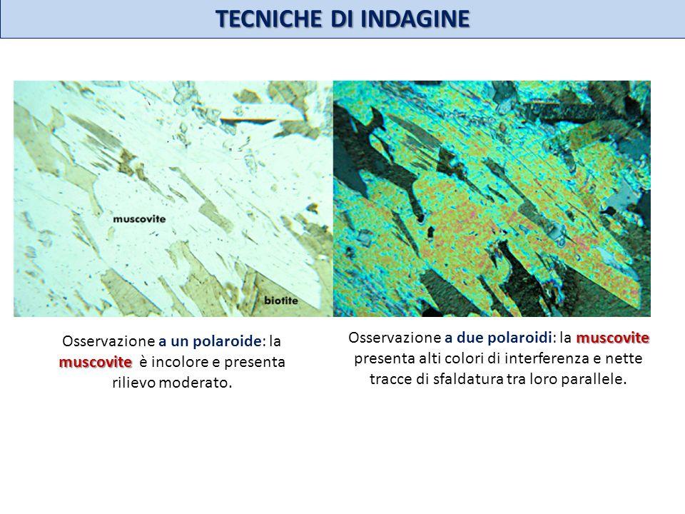 TECNICHE DI INDAGINE muscovite Osservazione a un polaroide: la muscovite è incolore e presenta rilievo moderato. muscovite Osservazione a due polaroid