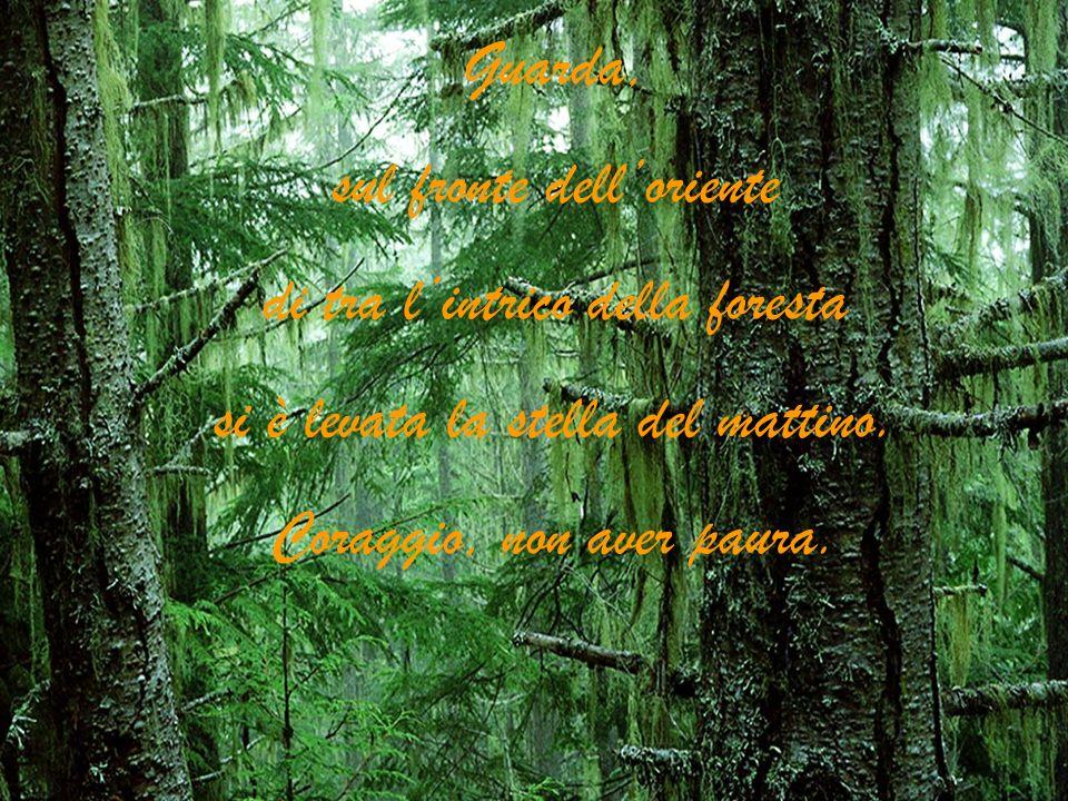 Guarda, sul fronte delloriente di tra lintrico della foresta si è levata la stella del mattino. Coraggio, non aver paura.